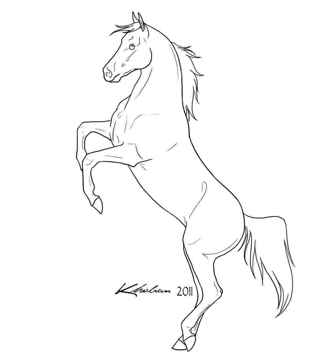 Coloring Festival Rearing Horse Coloring Pages More Than 99