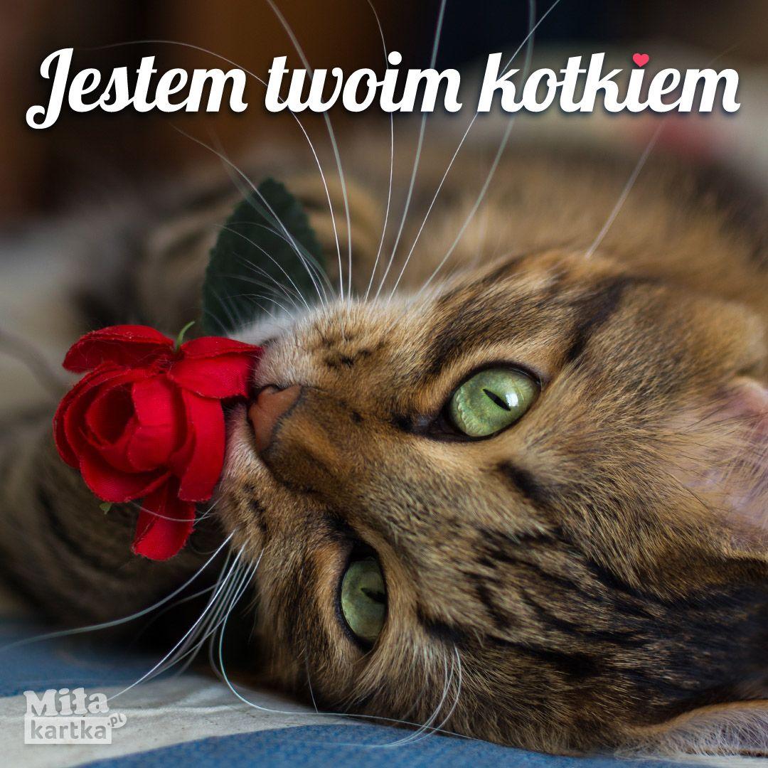 Jestem Twoim Kotkiem Kartki Miłość Walentynki Love