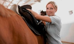 Yes, I have always wanted to learn to ride...Groupon - Horseback-Riding Lessons at Sunshine Riding Academy (Up to 62% Off). Four Options Available. in Royal Palm Beach-West Jupiter. Groupon deal price: $19