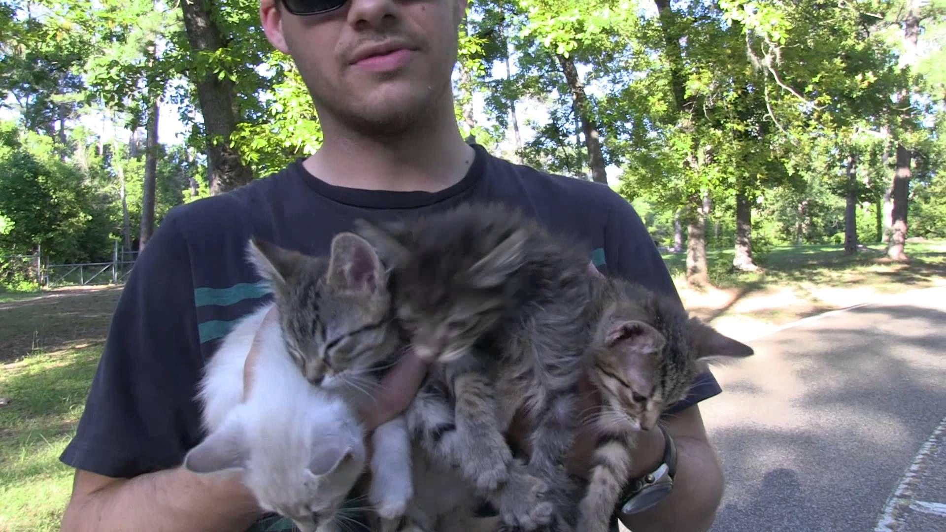 Surprise Kitten Rescue Awww Love Lil Kittehs Kitten Rescue Kittens Cute Kitten Gif