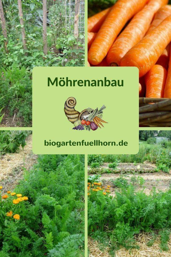 So gelingt der Anbau von Möhren #landscapingtips