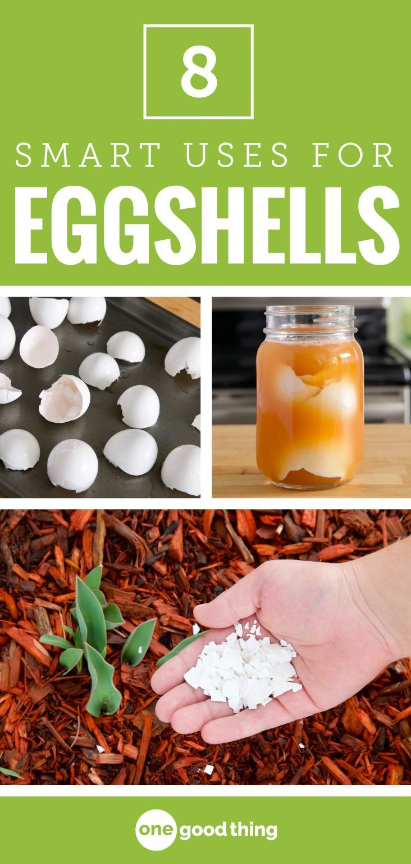 8 smart reasons you should be keeping your eggshells egg