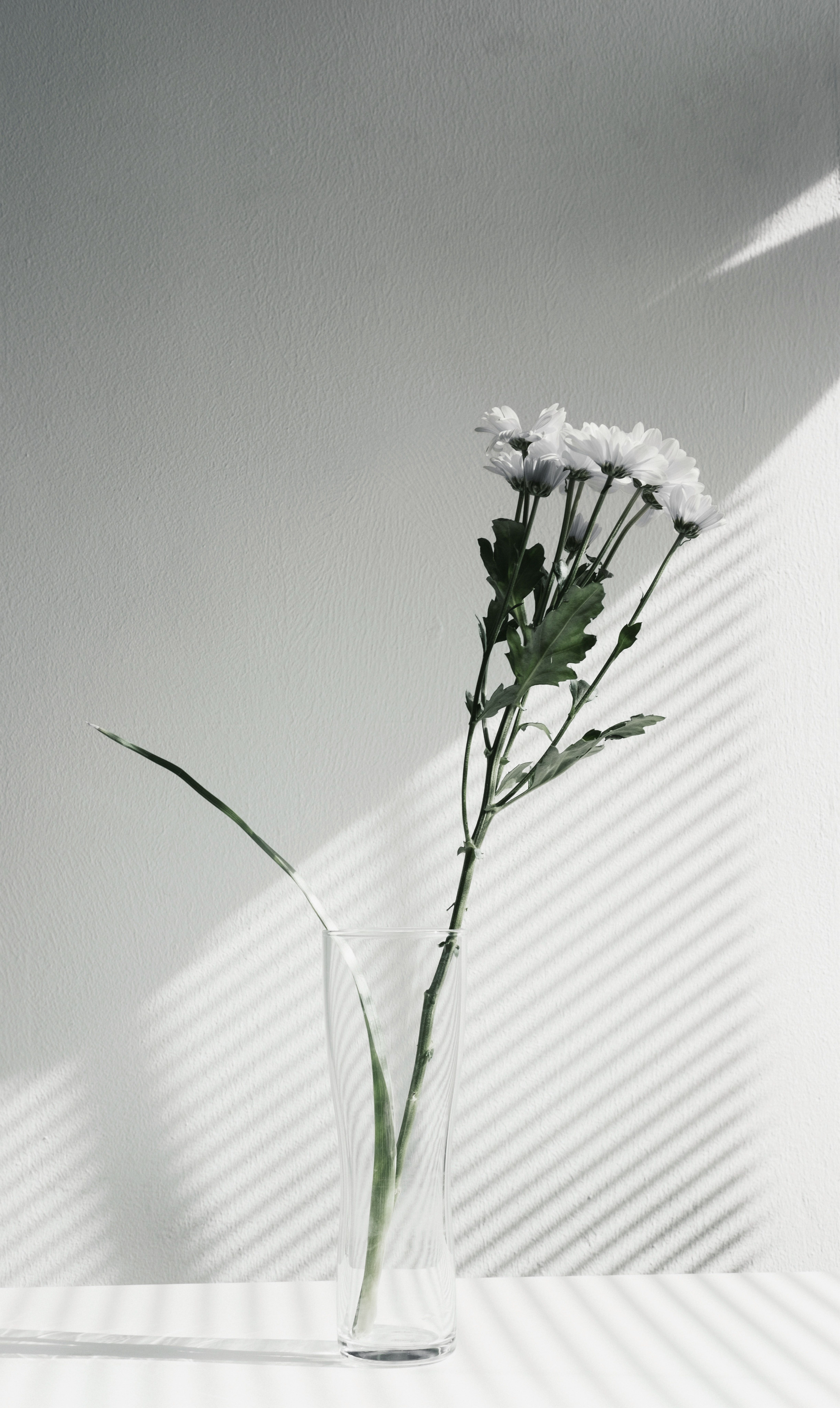 A Desaturated Shot Of White Flowers In A Glass Vase Aestheti