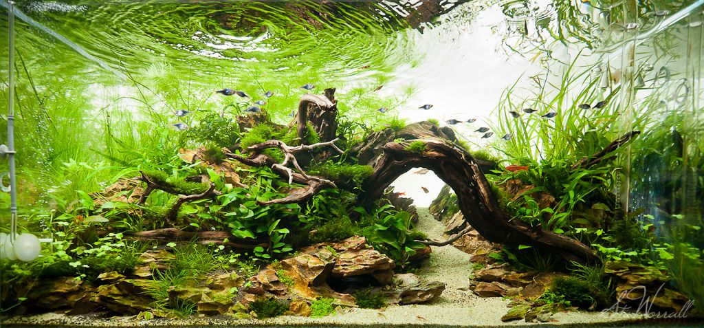 """Wood arches are great. Hard to find arched wood. [Here is a more complex/advanced/larger version of the """"islands with a bridge"""" layout. Also set up so that if a terrarium, the water would run all along the front which leaves the substrate level even which is better for a show tank]"""