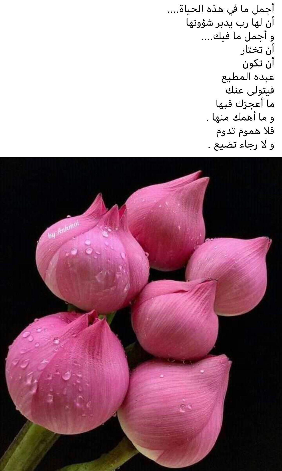 Pin By Wallaa Abbas On مواعظ خواطر إسلامية Arabic Typing Trust God Arabic Quotes
