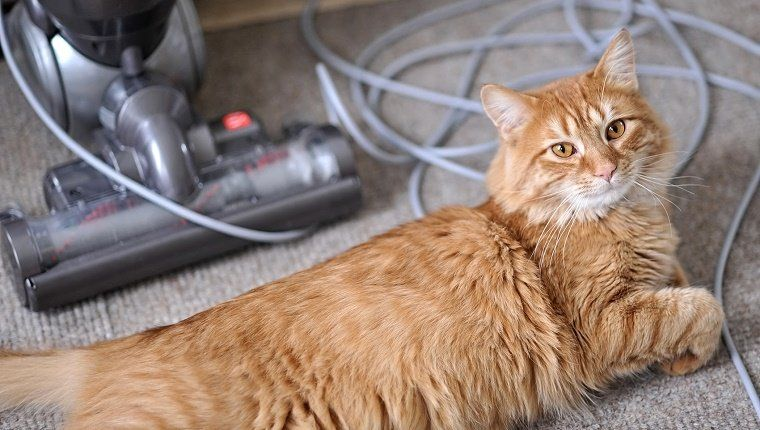 10 Reasons My Cat Is Better Than Your Kid Cleaning cat