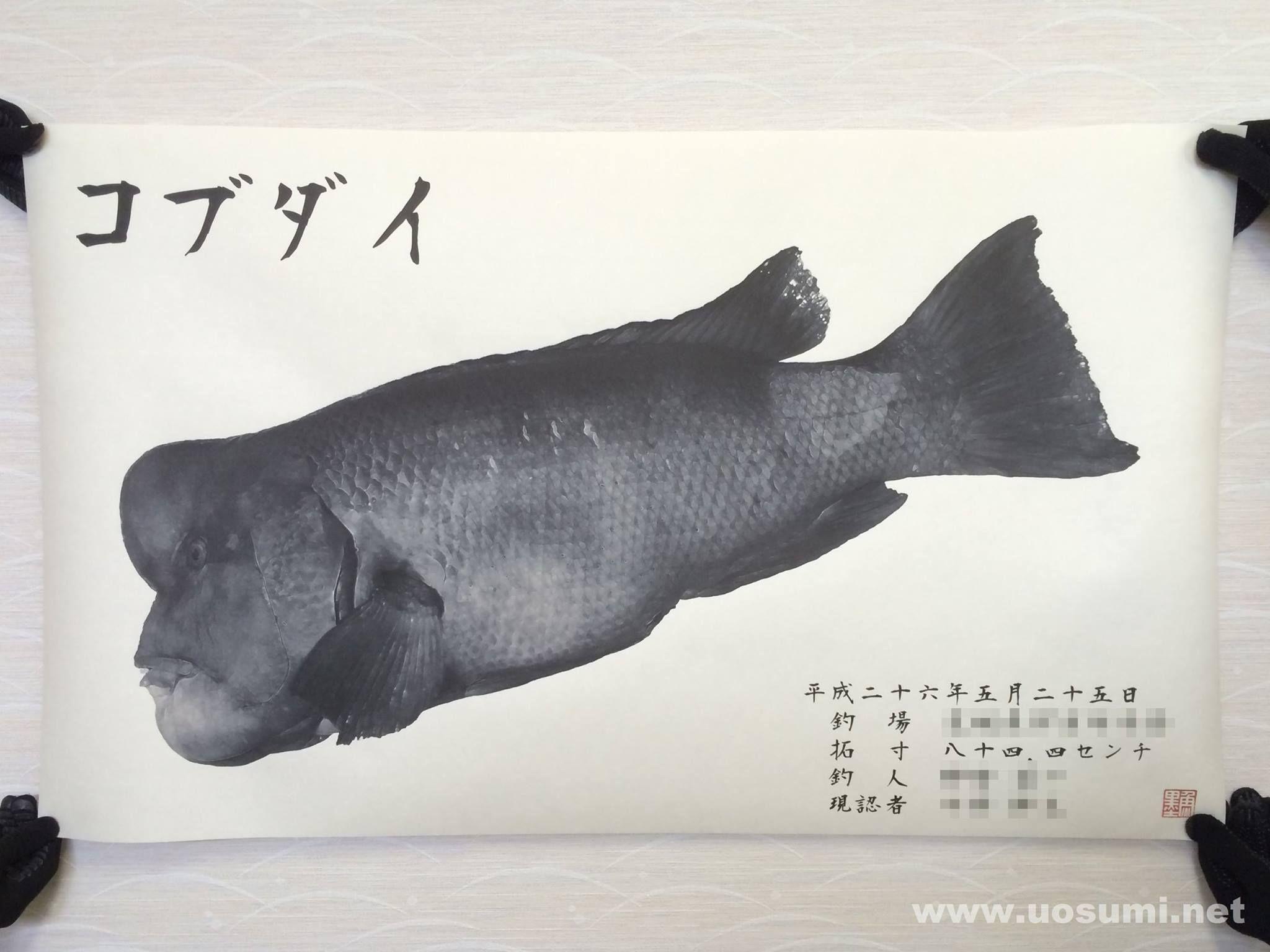デジタル魚拓サービス 魚墨で作成したコブダイの墨魚拓です。  It is a sumi fish print of a asian sheepshead wrasse. www.uosumi.net/