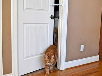 Hold Door Open For Cat And Keep Dog Out Cat Idea Dog Proof