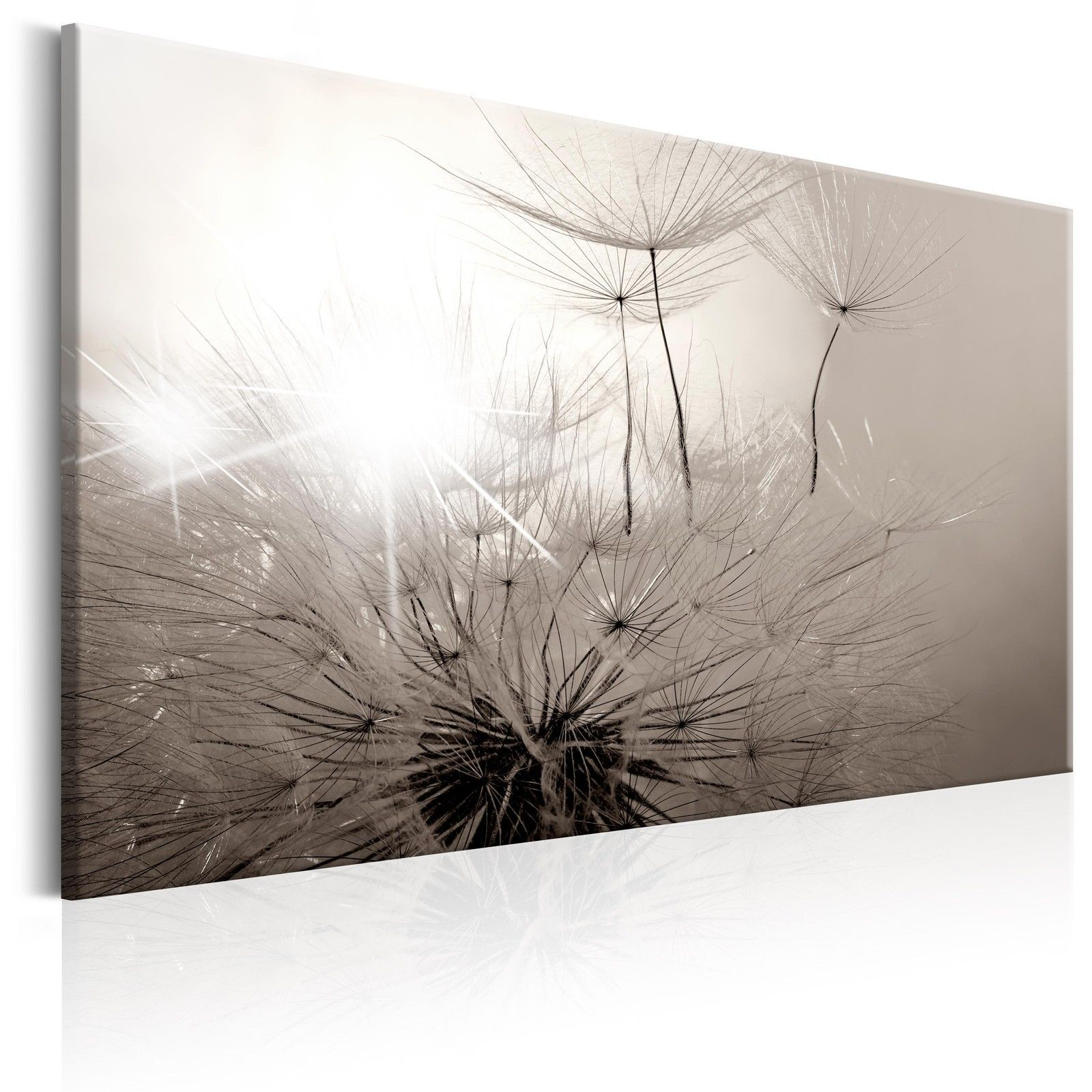 Vlies Leinwand Bilder Wandbilder Pusteblume Natur Grau Schwarz Weiß B B 0241 B A Ebay Bild Pusteblume Wandbilder Bilder