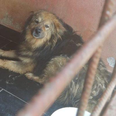 Pin Von Hgreenawalt Auf Witchy Fun In 2020 Tierheim Hunde Hunde Tierschutz Hunde