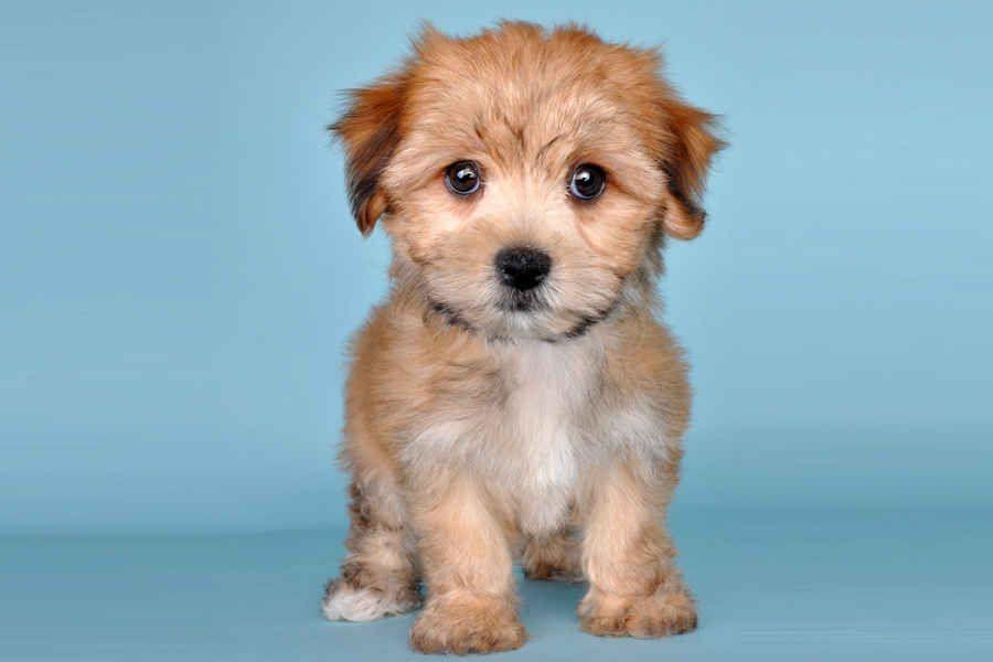 Flkggq6kjtr78233zw Jpg Jpeg Image 900x600 Pixels Cute Little Animals Cute Animal Pictures Cute Animals