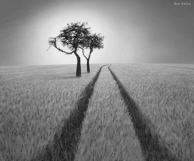 Lines to the horizon