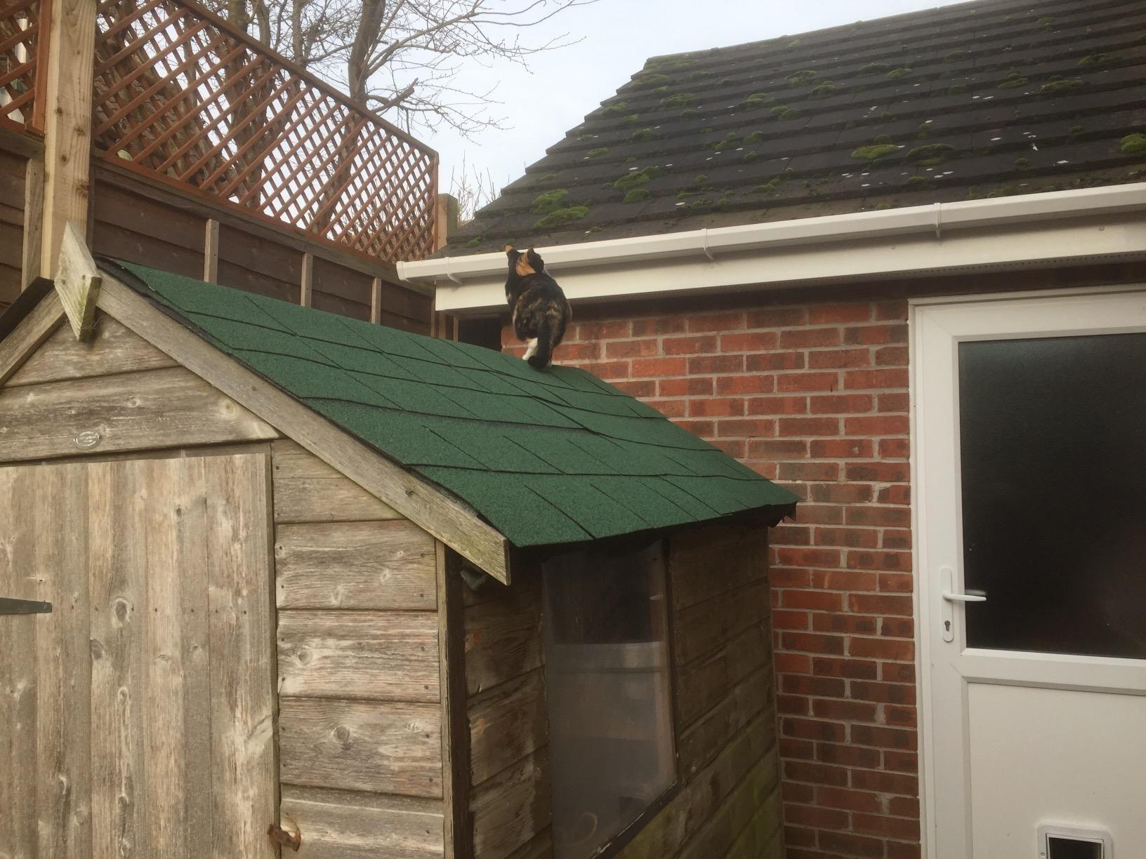 roofing felt shingles shed roof felt square butt 4. Black Bedroom Furniture Sets. Home Design Ideas