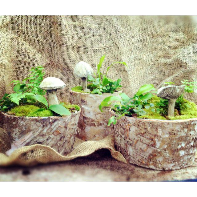 Woodland table gardens