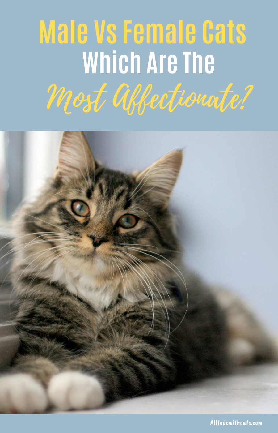 Are Male Cats More Affectionate Than Females? Which Make