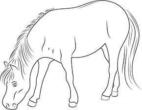 Ausmalbild Pferd Im Zoo Ausmalbilder Pferde Pferde Bilder Zum Ausmalen Ausmalen