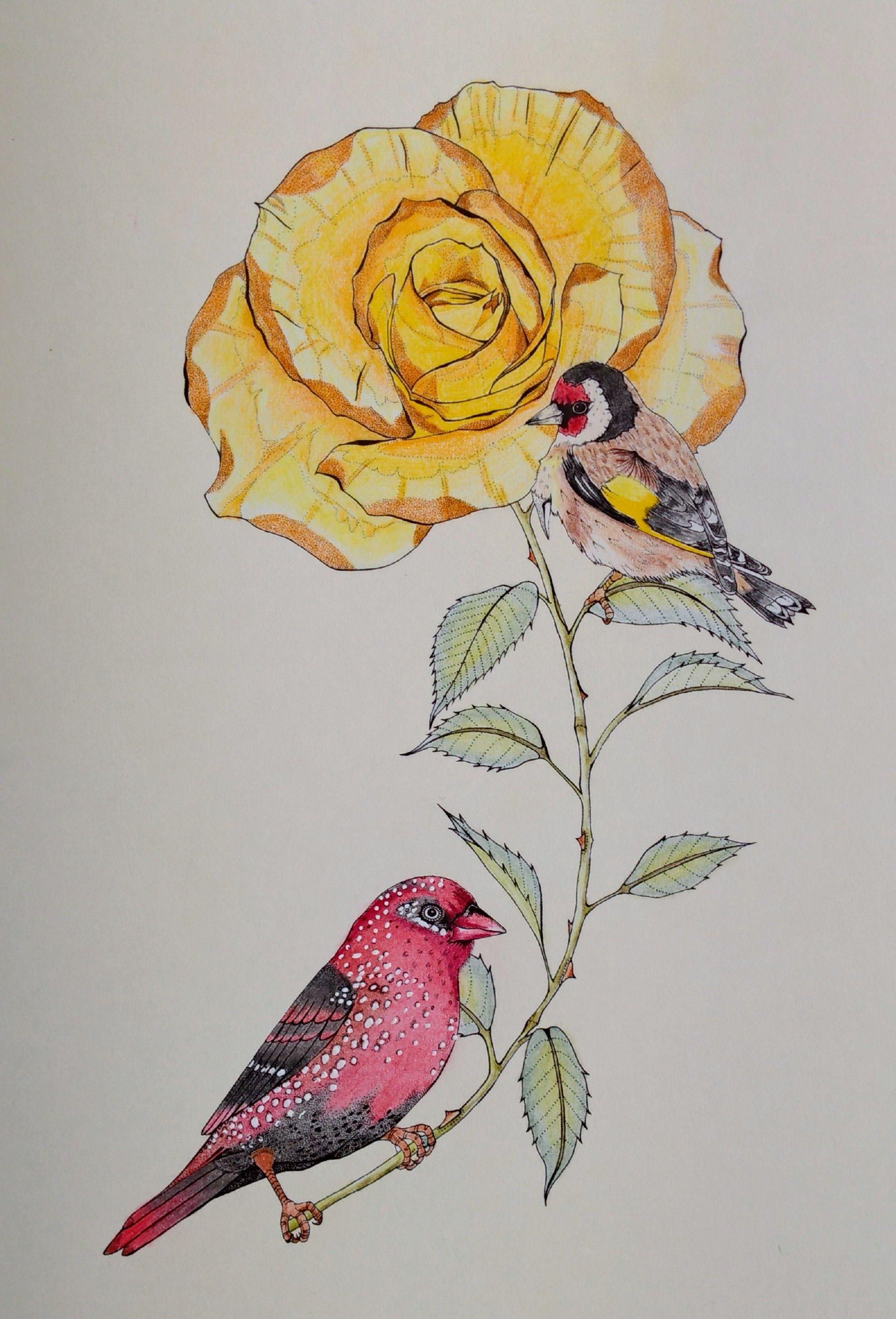 Uit Het Boek Vogel Paradijs Van Daisy Fletcher From The Book Birdtopia From Daisy Fletcher Gekleurd Door Adri Colored By Adri Coloring Books Color Art