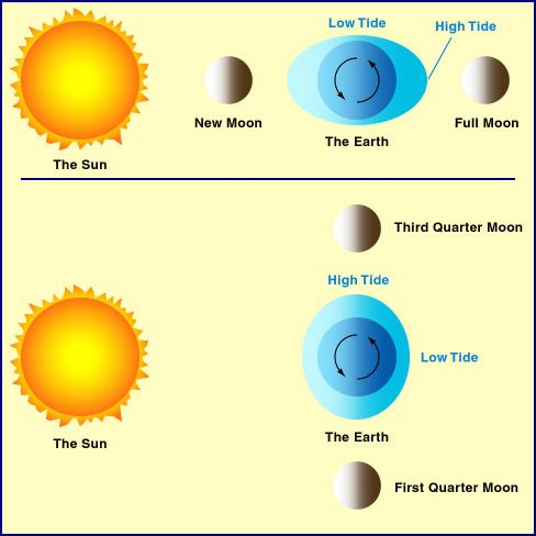 During each phase of a new moon or a full moon, the two tidal ...