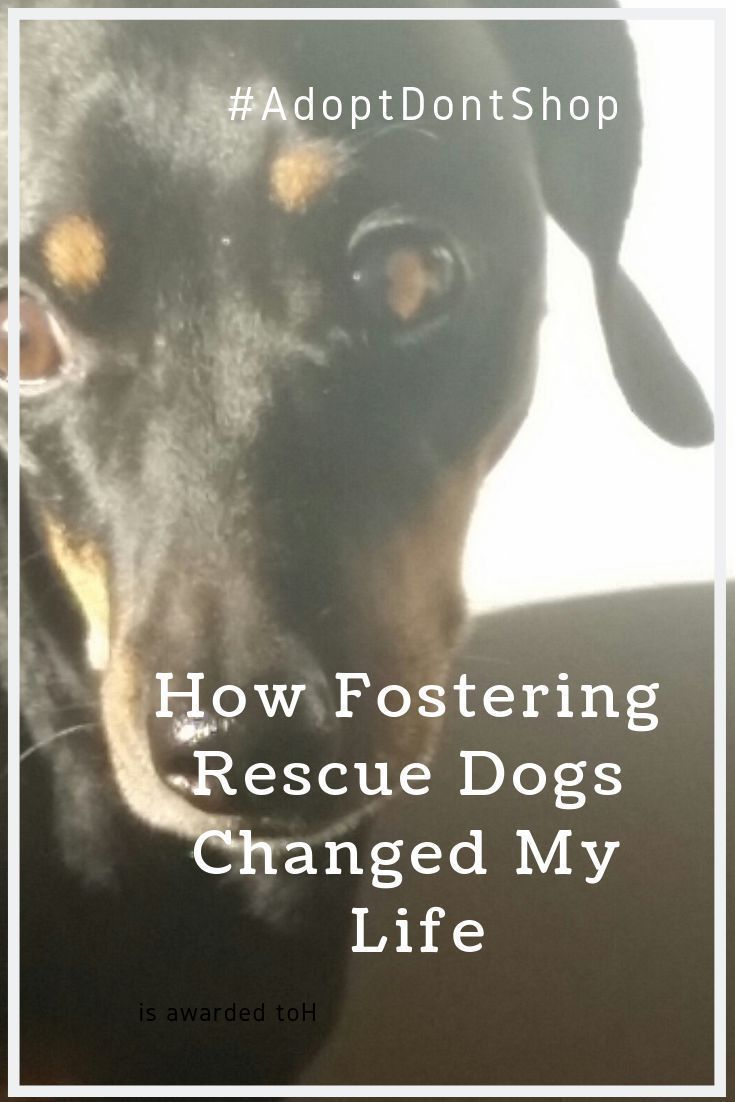 How Fostering Rescue Dogs Changed My Life Rescue Dog Stories