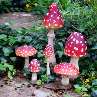 8007107e6bec4e1e75416e93771f6801 - How To Get Rid Of Toadstools In Your Lawn