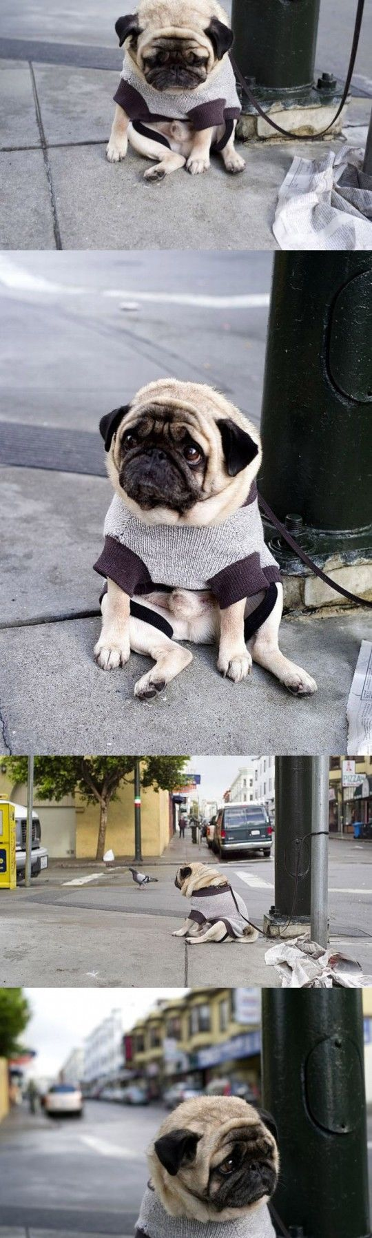 A depressed pug........AWWWWWWWWW why cant i ever keep my cool around PUGS....even the word makes my crazy lol