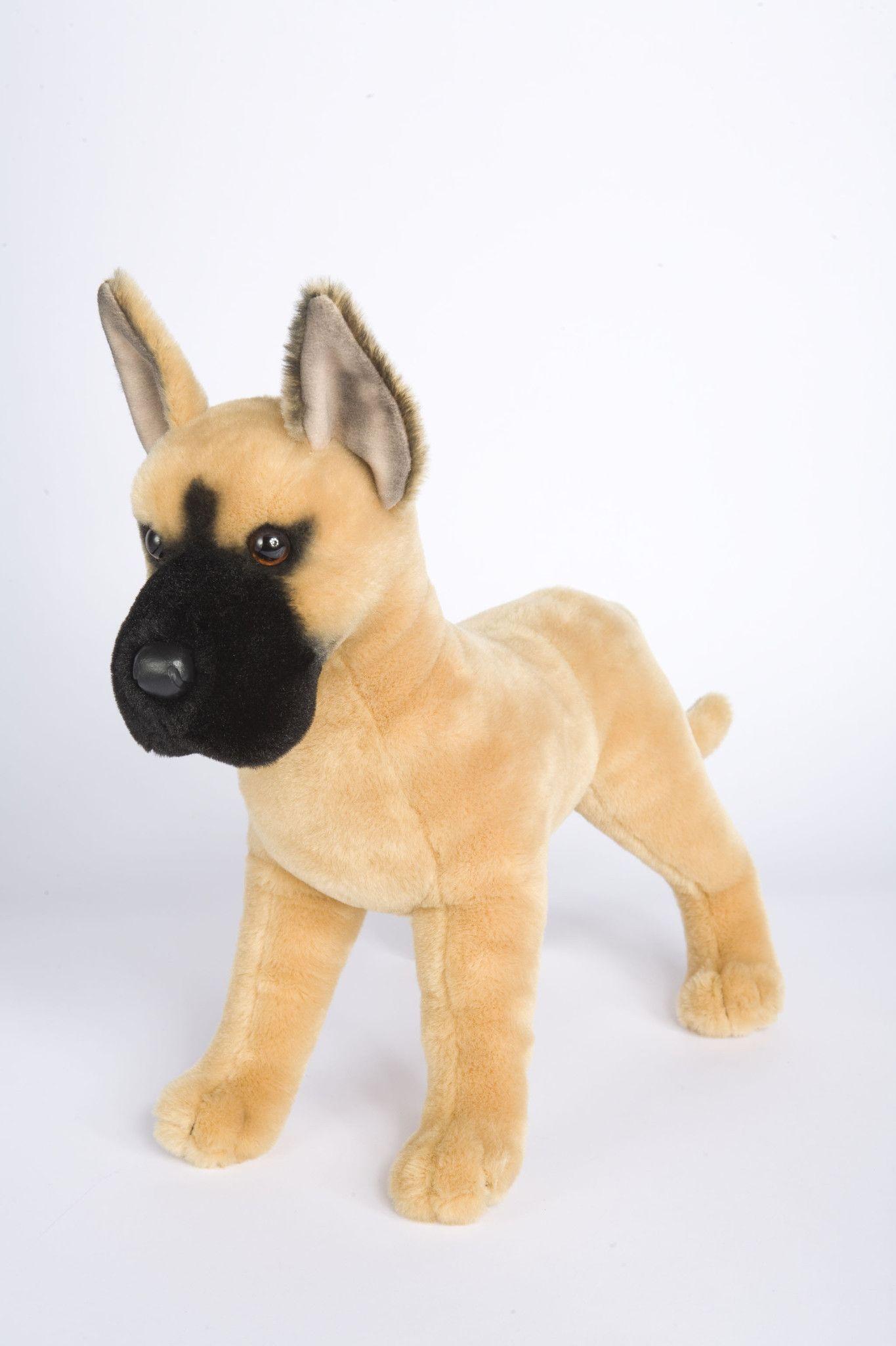 Brute Great Dane Dog Great Dane Dogs Great Dane Rescue Dogs