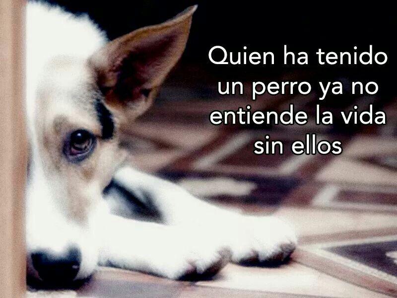 Quien Ha Tenido Un Perro Ya No Entiende La Vida Sin Ellos Perros Frases Mascotas Perros