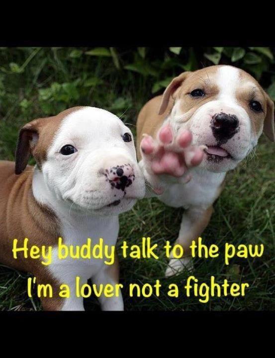 Talk To The Paw I M A Lover Pitbulls Cute Animals Pitbull