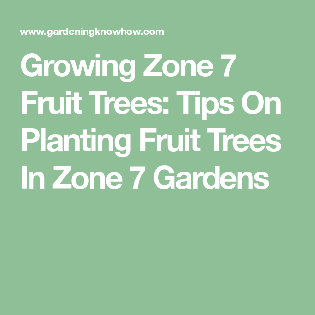 Growing Zone 7 Fruit Trees: Tips On Planting Fruit Trees