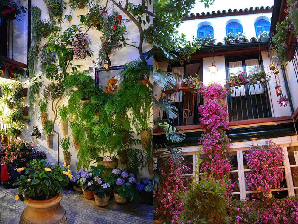 Web Oficial De La Fiesta De Los Patios De Córdoba Con Información De Los Patios Plano Interactivo Age Patios Cordobeses Decoración Vegetal Patios De Cordoba