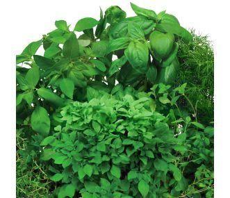 Aerogarden Herb Seed Kits Aerogarden Seed Pod Kits Grow A 640 x 480