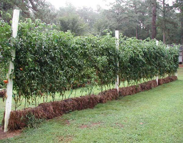 Excellent Resource On Straw Bale Gardening Strawbale 400 x 300