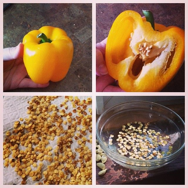Creating Our First Vegetable Garden Advice Please: Step By Steps Grow Your Own Peppers. Make Sure You Dry The