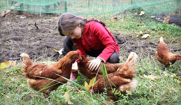 Merveilleux Raising Backyard Chickens: My 8 Year Old Daughteru0027s Egg Business |  Eartheasy Blog