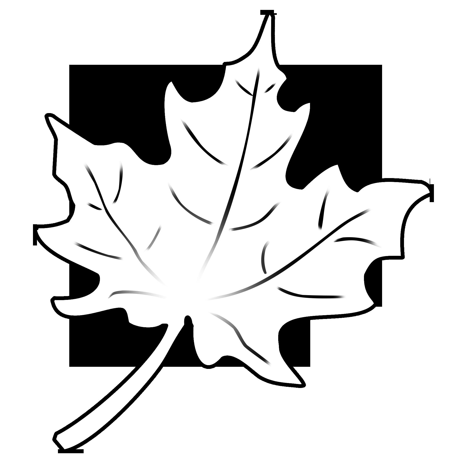herbstblaetter vorlagen 2   Leaf drawing, Fall leaves ...