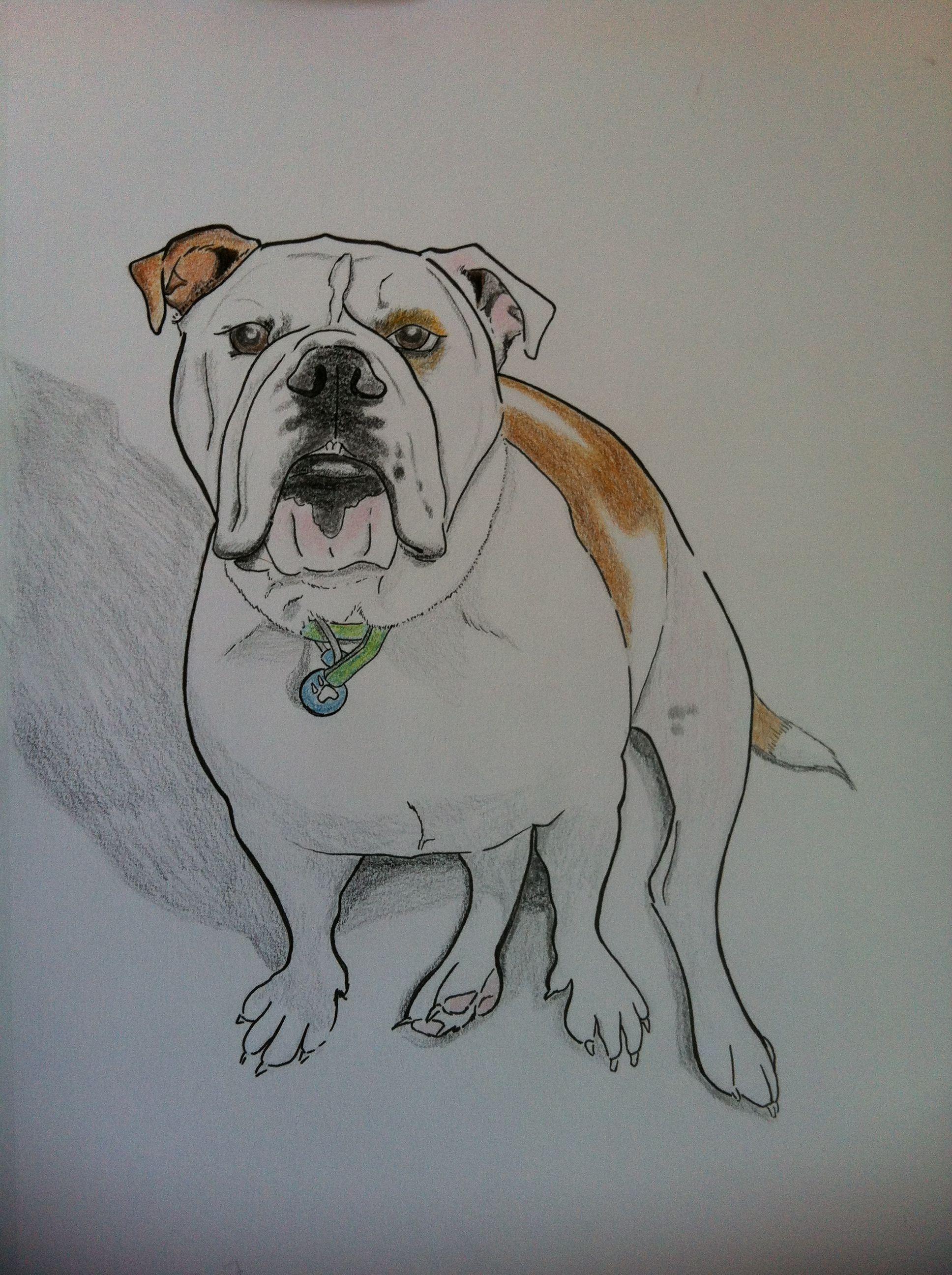 Another custom bulldog portrait I drew. His name is Rolls
