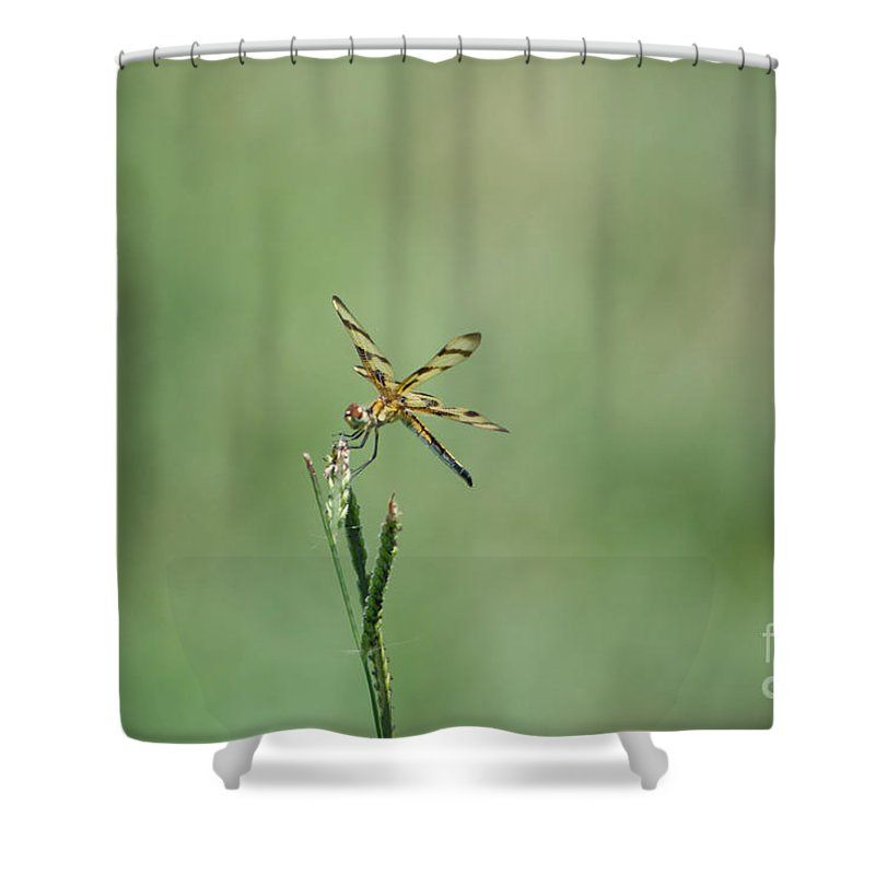 Interesting Dragon Fly Shower Curtain. Dragon Shower Curtain featuring the photograph Fly 3 by Scott  Hervieux