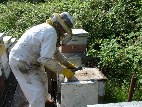 The Beekeepers Calendar Year and Guide to Bee Keeping Throughout the Year