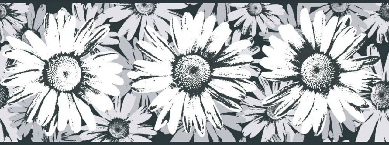 York Wallcoverings BT2732B Daisy Wallpaper Border, Black