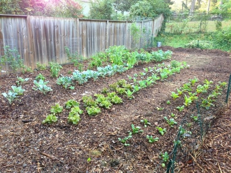 Back To Eden Fall Garden Veggie Garden Homestead Gardens