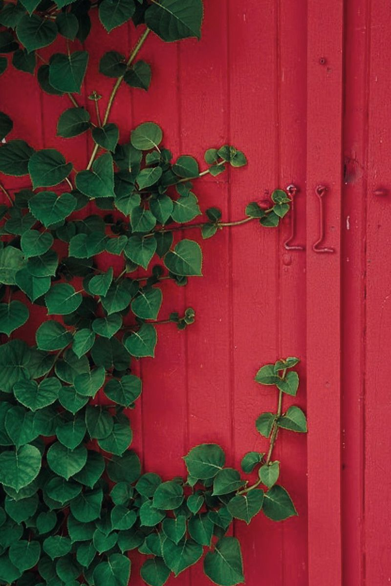 Pin by bianca on green u red Pinterest Green and Red