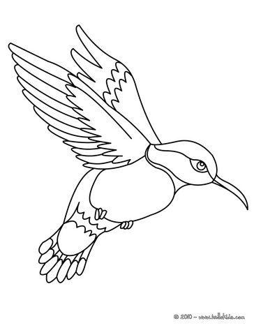 Colibri coloring page - hummingbird | Embroidery PDFs | Pinterest