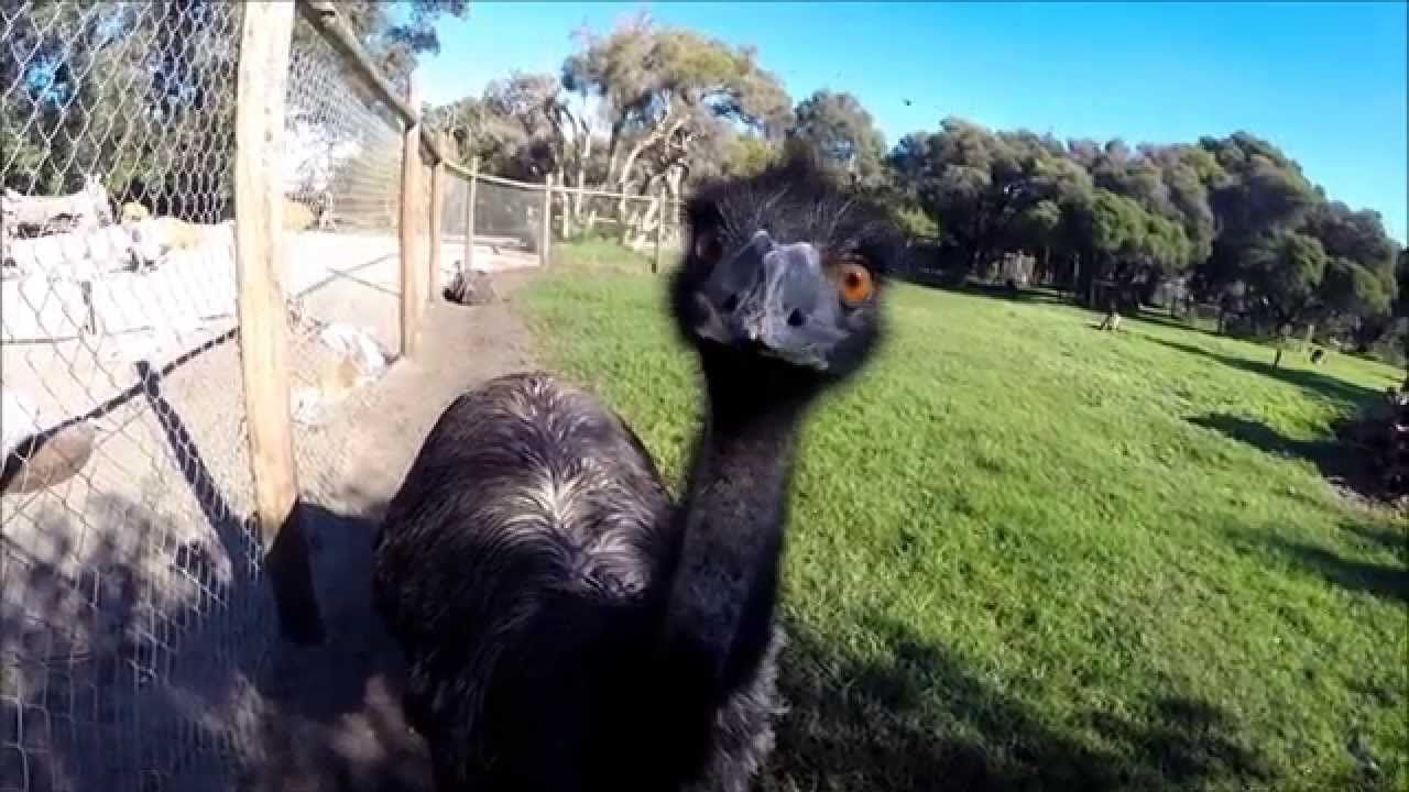 Wildlife of Western Australia