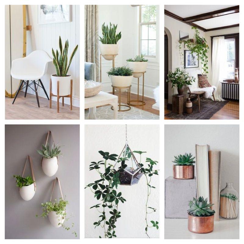 Wall Planters Homebase