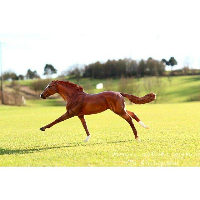 что картинки лошадей брейер на природе постоянно ищет
