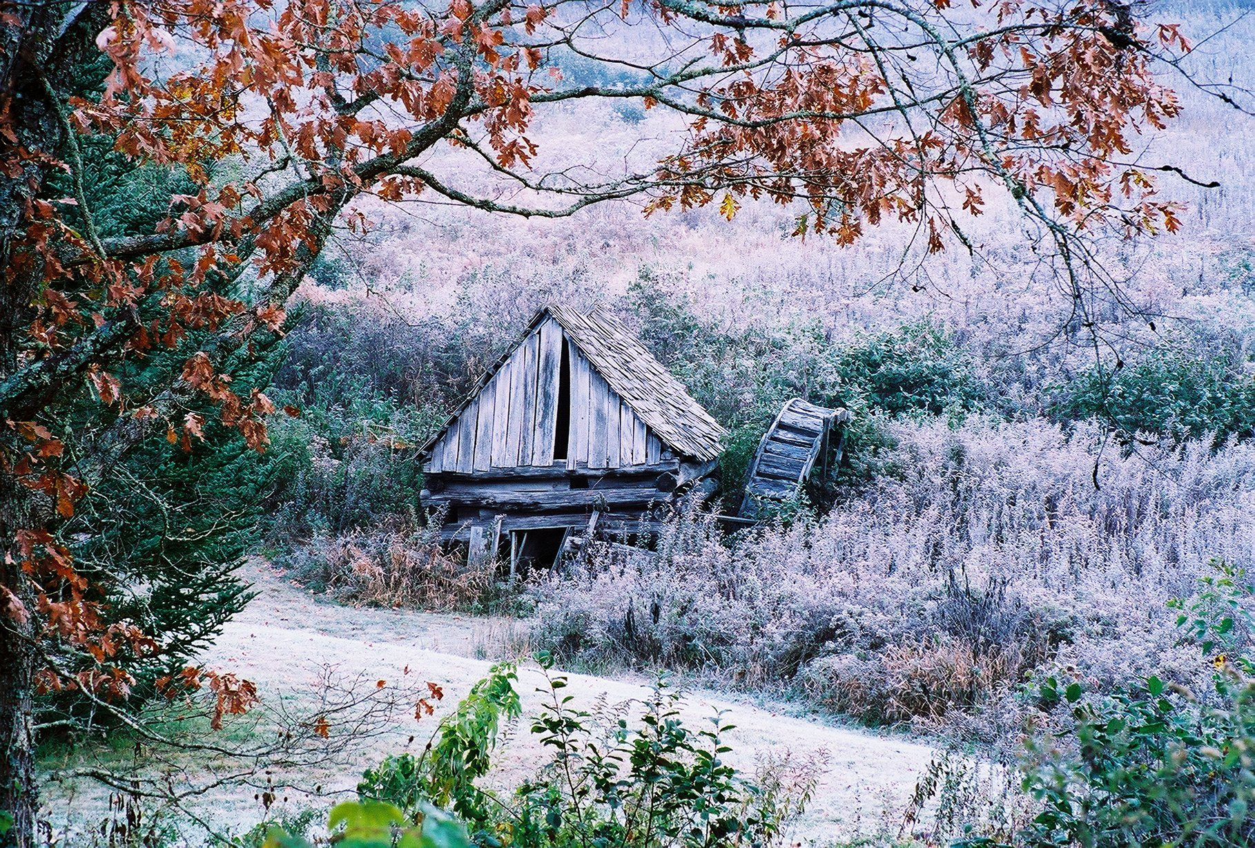 Barn with heavy frost and Autumn leaves Photo by Ed Reed