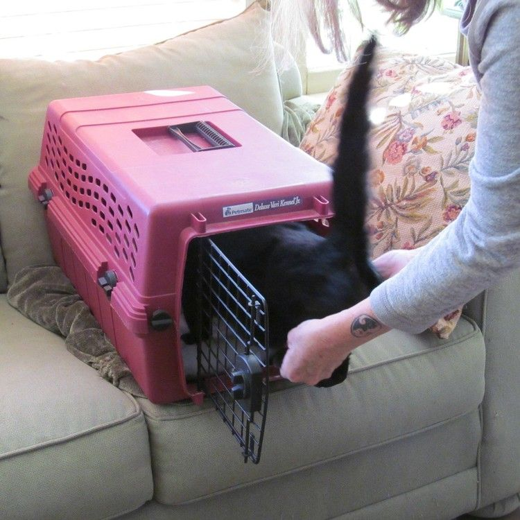 A Great Trick for Getting Kitty Into her Carrier