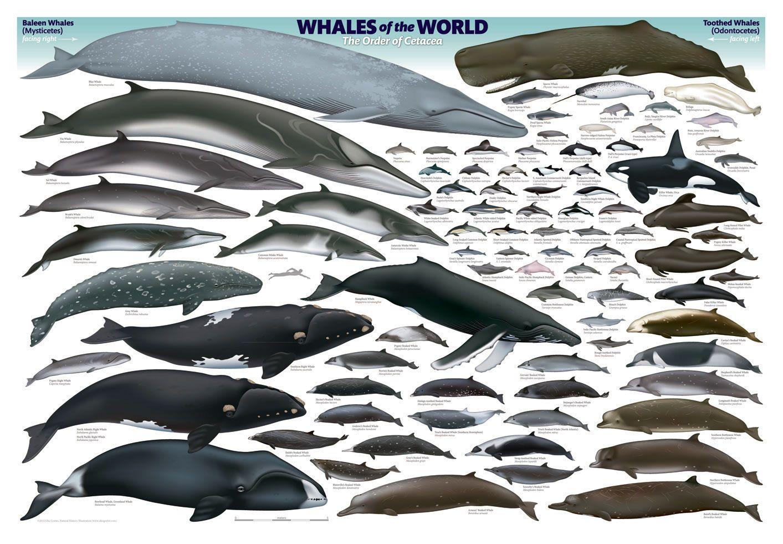 Wrap - Whale Chart