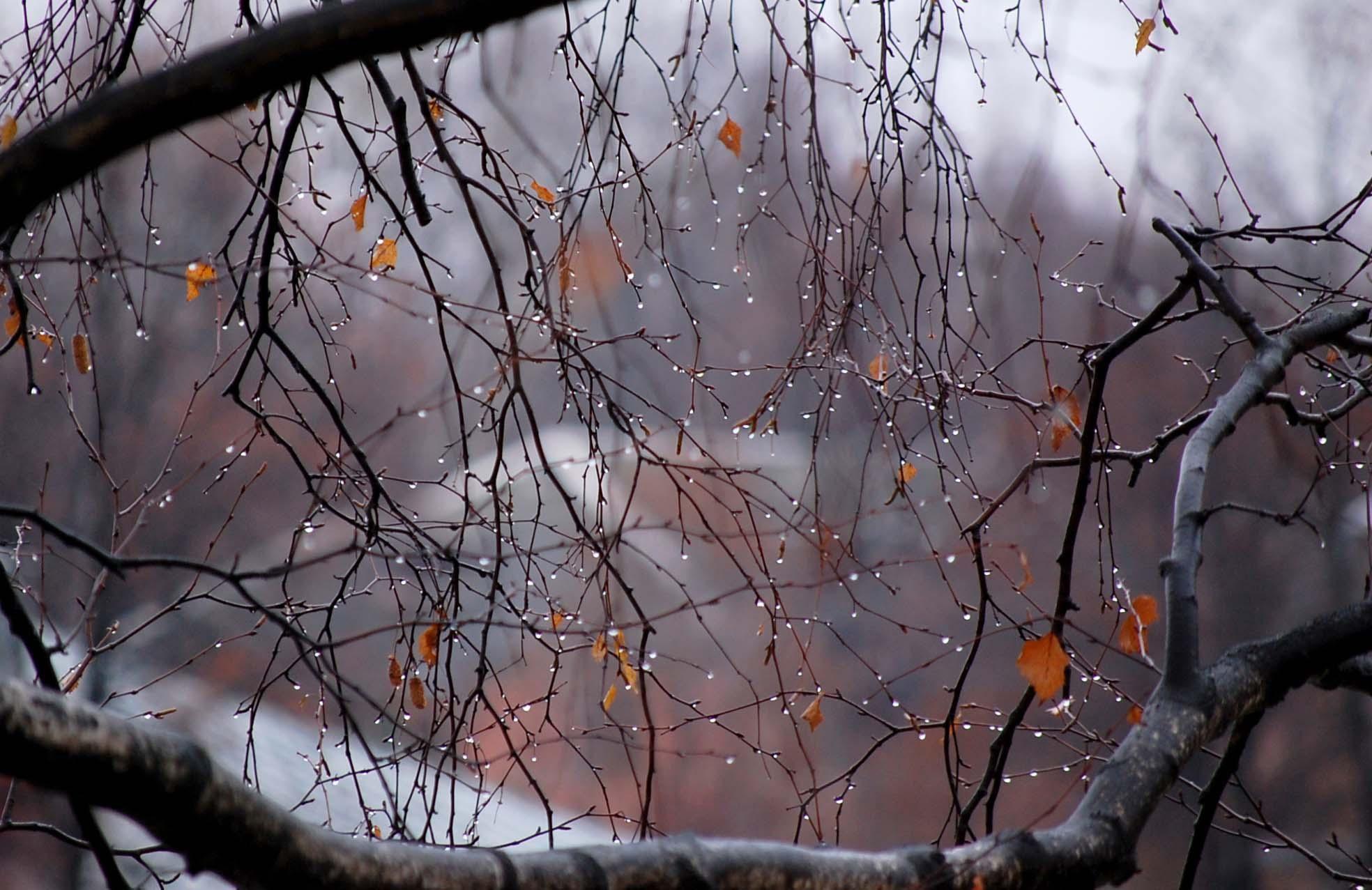 Картинки осень холодает