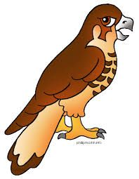 image result for baby hawk clipart baby animals pinterest baby rh pinterest com hawk clipart images hawk clipart abstract